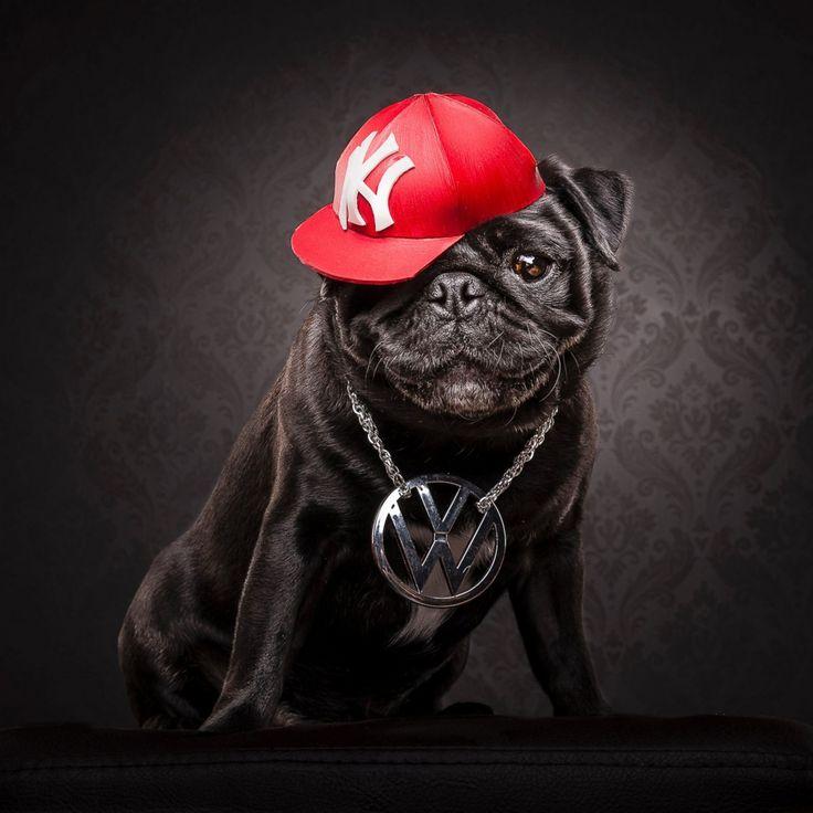 mopsov_naryadili_hip_hop_vinegret (6)