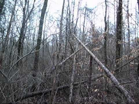 POSSIBLE LARGE BIGFOOT STRUCTURE WITH FOOTSTEPS