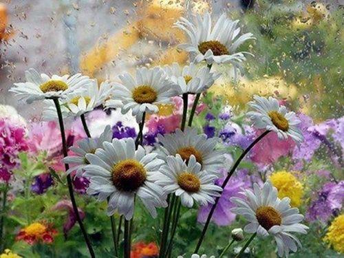 Nyári virágok esőben ,Virágok - Gyönyörű őszirózsák vázában ,Virágok - Gyönyörű íriszek,Pipacsok,Gyöngyvirágok,Gyönyörű liliom,Krókuszok a hóban,Gyönyörű rózsák - jpg kép,Hóvirágok - jpg kép,Hóvirág, - jpiros Blogja - Állatok,Angyalok, tündérek,Animációk, gifek,Anyák napjára képek,Donald Zolán festményei,Egészség,Érdekességek,Ezotéria,Feliratos: estét, éjszakát,Feliratos: hetet, hétvégét ,Feliratos: reggelt, napot,Feliratos: egyéb feliratok ,Finomságok, kávék,italok képei,Gyász, emlékezés…