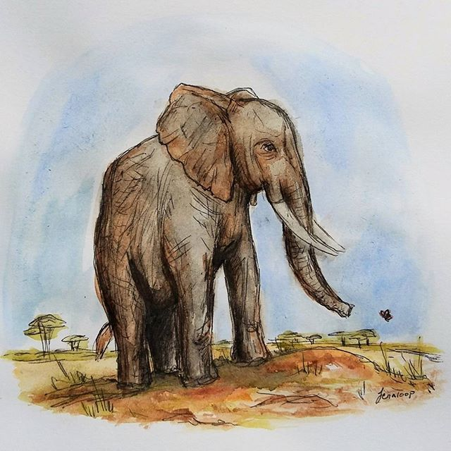Jennloop on Instagram: Today's creative work, a watercolor elephant. It's a good morning (ok, it was noon, I got up late) when you get to start it by making a painting.    #elephant #elephantart #animalart #illustration #watercolor #watercolorpainting #watercolour #vattenfärg #animallover #wildlife