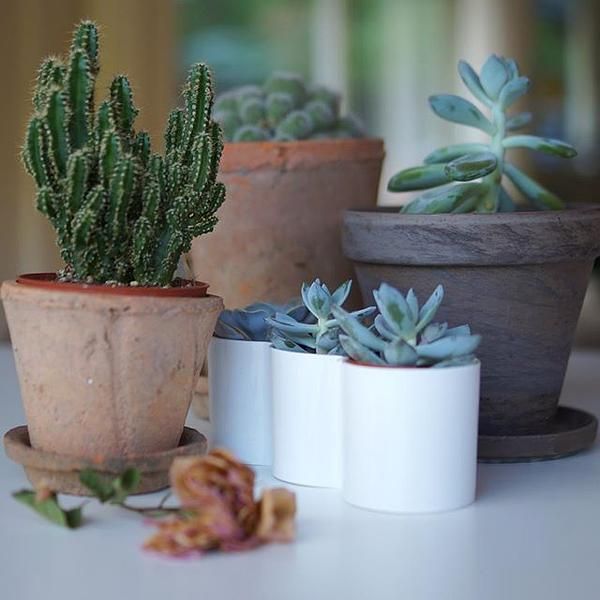 trendy b.for diamond trio #elho #bfor #diamond #trio #planter #succulents #cacti #mini #deco #home