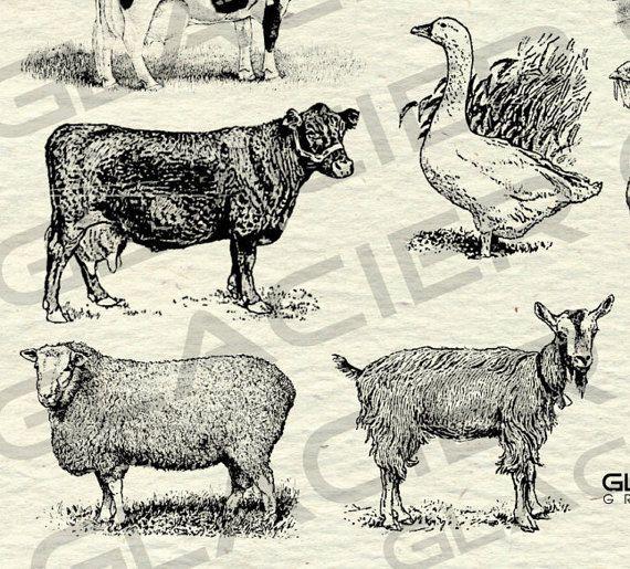 Vintage Farm Animal Illustrations Printable Farm Animals Etsy Animal Clipart Animal Illustration Animals