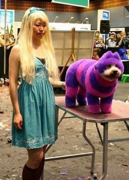 Alice and Cheshire Cat in Wonderland Extreme Dog Haircuts