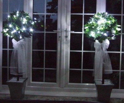 Bay Trees With Lights