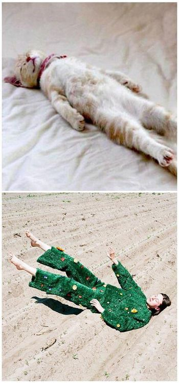 Happy Friday! Hope you have a rockin weekend - it's almost drinks time! Have a feeling we might end up a little like this after tonights festivities…Cat via google. Fab fashion snap found over on synchrodogs.com