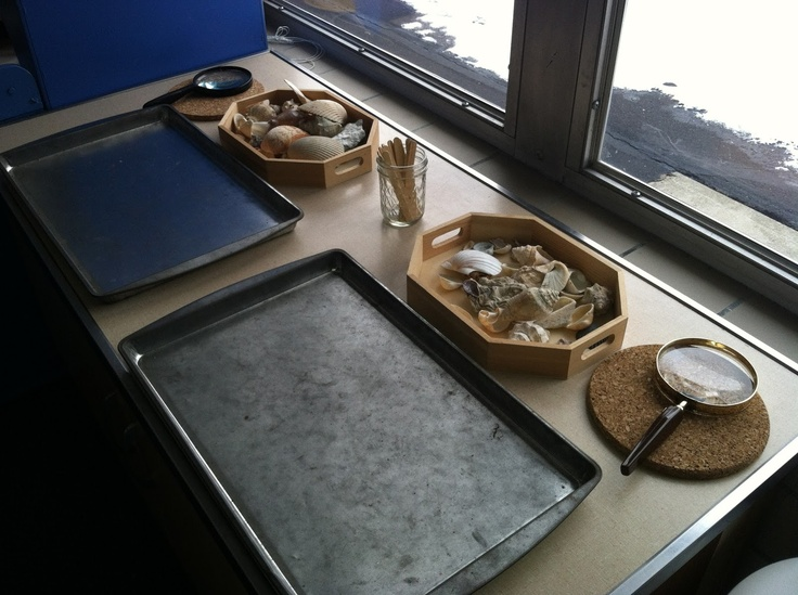 "Shell Sorting Discovery Station - metal trays to sort on & wooden sticks to create different sections, depending on how many groups they want to sort the shells into ("",)"