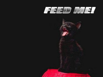 Free feed-me-cute-cats-funny-pets-wallpapers.jpg phone wallpaper by cacique