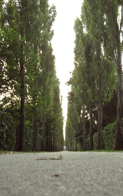 Late_Summer_Cemetery_Allé