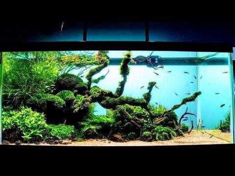Aquascaping Style - Create A Triangular Scape With The Golden Spiral - YouTube