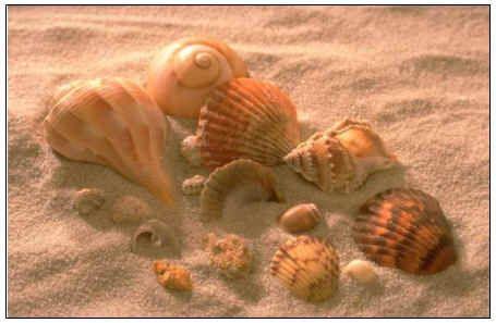 Someone's treasures on the east coast: Beautiful Seashells, Sea Shells, North Carolina Beaches, Seashells Collection, Sell Sea, Collection Seashells, Seashells Seashore, Sands Dollar, Sea Shore