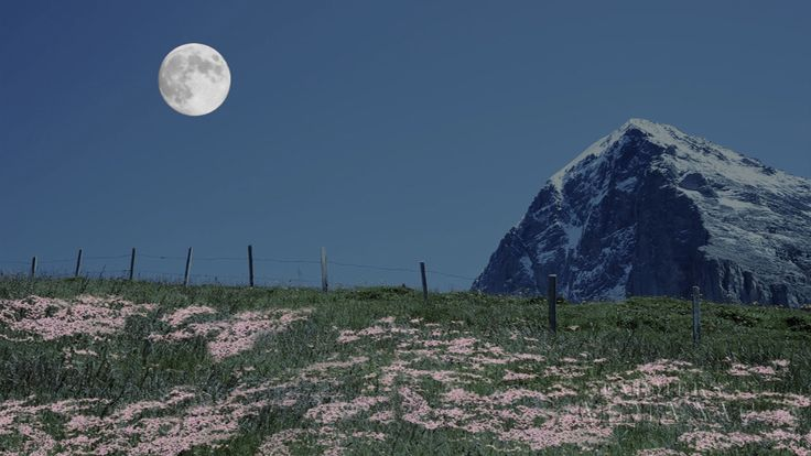 Farmers' Almanac Video: April's Full Pink Moon