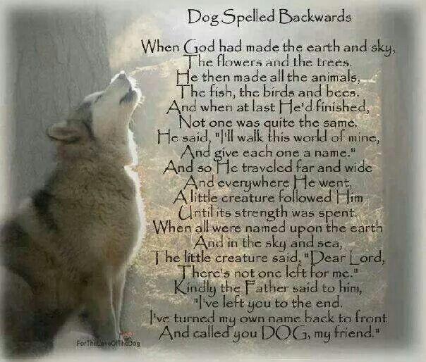 Dog spelled backwards | Dogs poems | Pinterest | Dog and ...