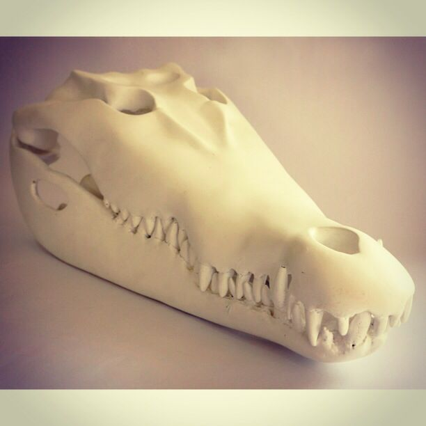 CC resin crocodile head