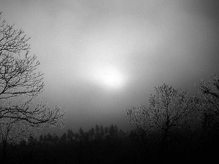 B&W - Morning fog
