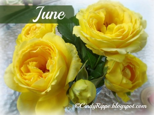Yellow Roses, June birth flower, meanings of flowers, Happiness, Proverbs 16:20, Florals-Family-Faith at; www.CindyRippe.blogspot.com