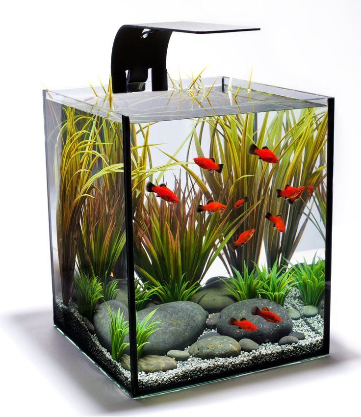 Small fish tanks, good for betta or other small fish. These fit on a desk in the office.