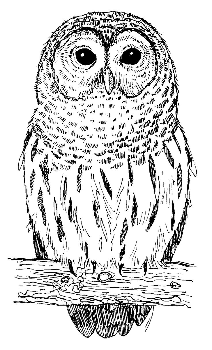 best 20 owl symbolism ideas on pinterest what do owls symbolize
