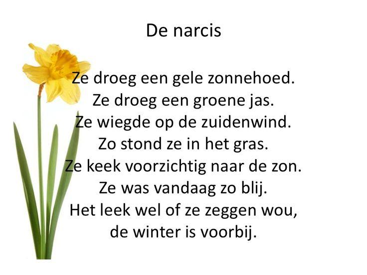 * Versje: De narcis!