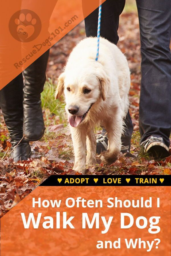 How Often Should I Walk My Dog And Why Dog Training Dogs Dog Behavior Training