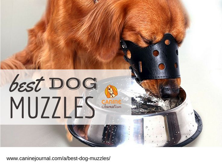 16 best dog grooming images on pinterest dog grooming dog best dog muzzle to keep your dog from barking biting and grooming solutioingenieria Gallery