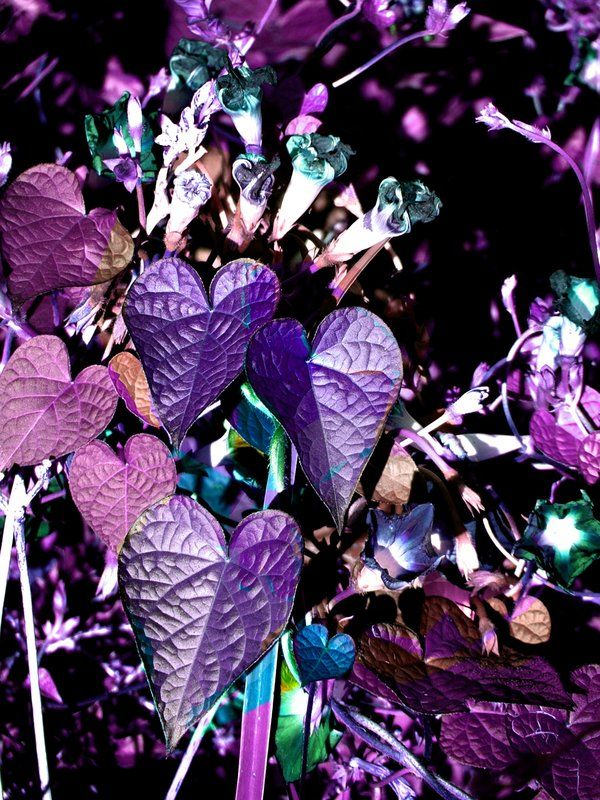 nature's hearts by dreaminjinx on DeviantArt