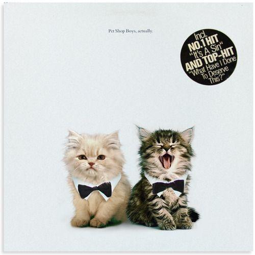 Pet Shop Boys, catually.: Music, Pets Shops Boys, Cat Shops, Boys Cat, Www Thekittencovers Tumblr Com, Adorable, Kittens Covers, Covers Catual, Animal