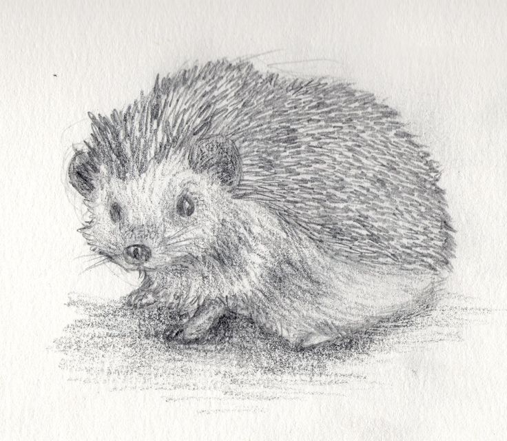 Hedgehog Drawing | hedgehog by filipissima traditional art drawings animals 2012 2014 ...