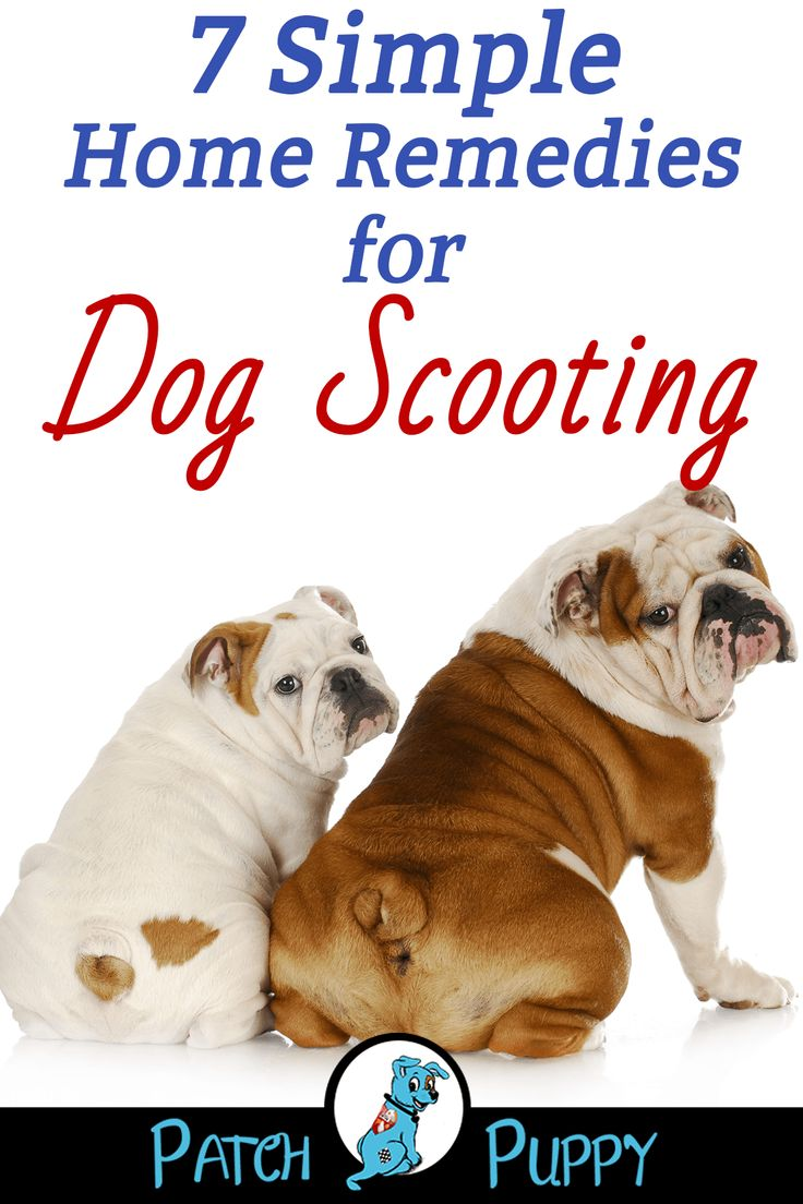 how to stop dogs from scooting