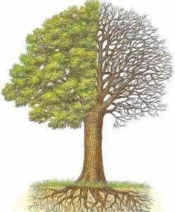 arbre_feuillu
