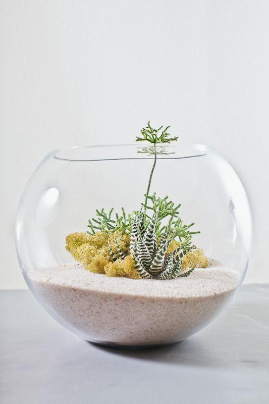 Image of Tranquility- White Desert Terrarium Kit Large