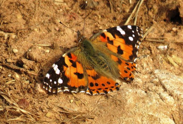 One of our lovely butterflies