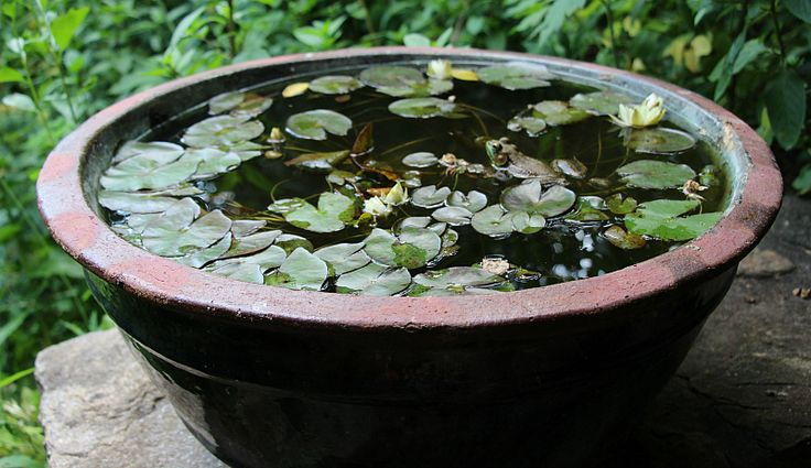 Best 25 container water gardens ideas on pinterest for Pond in a pot ideas