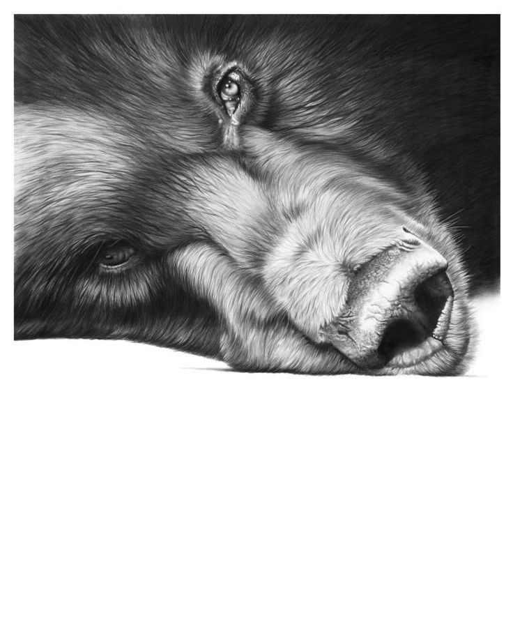 Best Richard Symonds ART Images On Pinterest Animal Africans - Stunning drawings of endangered wild animals by richard symonds