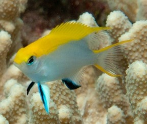 1000 images about under the sea fish on pinterest for Fish representative species