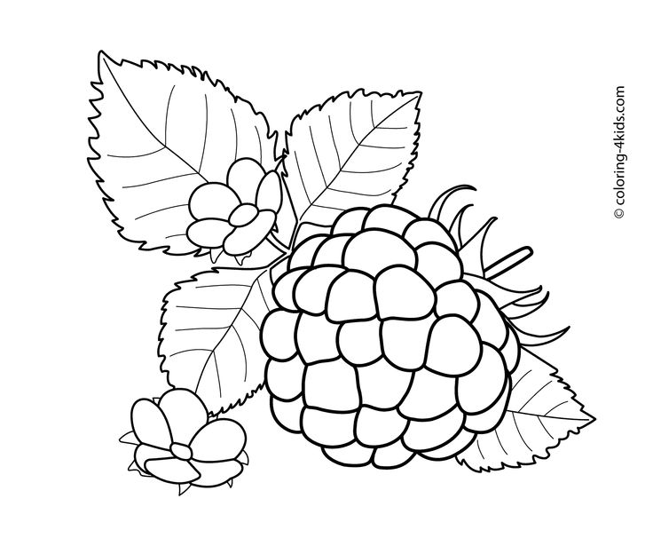 raspberry with flowers fruits and berries coloring pages for kids printable free - Coloring Pages Leafy Vegetables