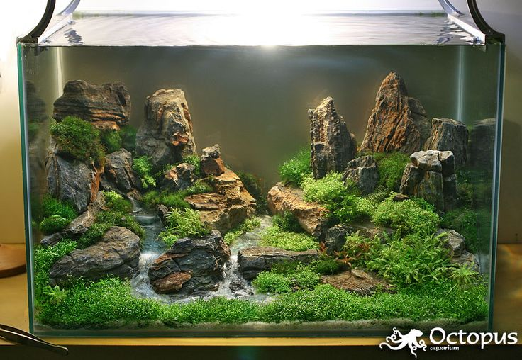 Fish Tank Aquascape : aquascaping House Pinterest
