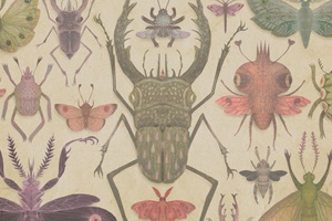 Serbian illustrator and graphic designer Vladimir Stankovic's strange and inspiring collection of insects almost manage to hide their alien weirdness (an extra eye, an unnaturally bulbous head) beneath the immediate beauty and charm of his drawings. Stankovic is currently working on his master's thesis in Finland, developing his craft and experimenting with new ways to combine traditional and digital illustration media.: Insects Art, Charts, Vladimir Stankov, Botanical Prints, Features Wall, Graphics Design, Behance Network, Digital Illustrations, Beetles
