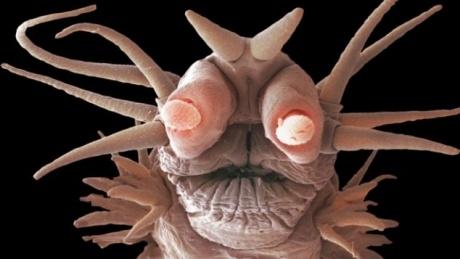 MONŞTRII din adâncuri. Creaturi care nu au văzut niciodată lumina  http://www.realitatea.net/monstrii-din-adancuri-creaturi-care-nu-au-vazut-niciodata-lumina-foto_915465.html#ixzz1mxMkvoWu