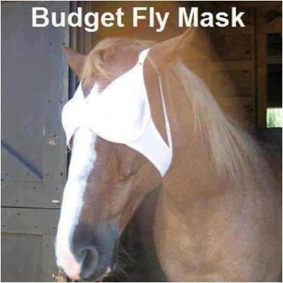 Budget Fly Mask, ha ha!