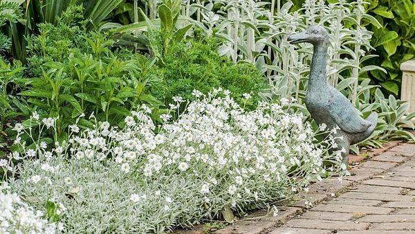 Díky stříbrným rostlinám zahrada prokoukne