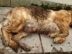 A HEARTLESS dog owner has been jailed for feeding his pet painkillers before beating the animal to death with a shovel.