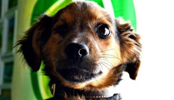 Teneri cuccioli Notizie: NAPOLI, IL CANE RAGÙ UN CUCCIOLO CON UN SOLO OCCHI...