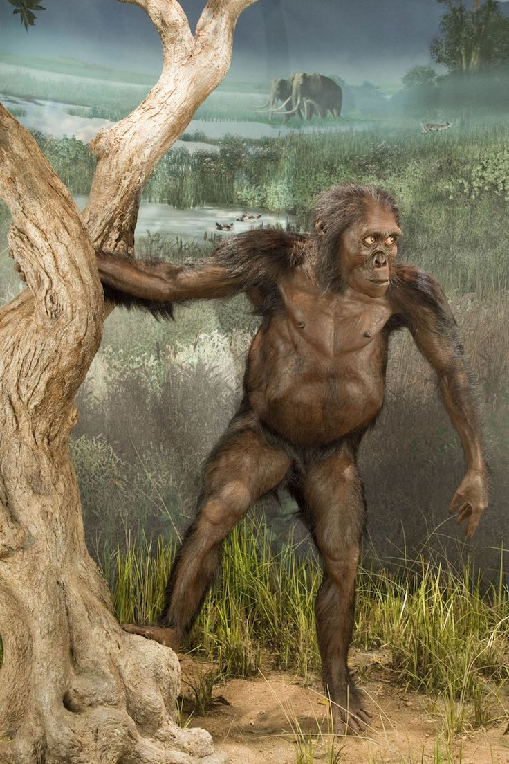 Reconstruction of Lucy (Australopithecus afarensis) museum diorama by John Gurche at the Smithsonian Institute