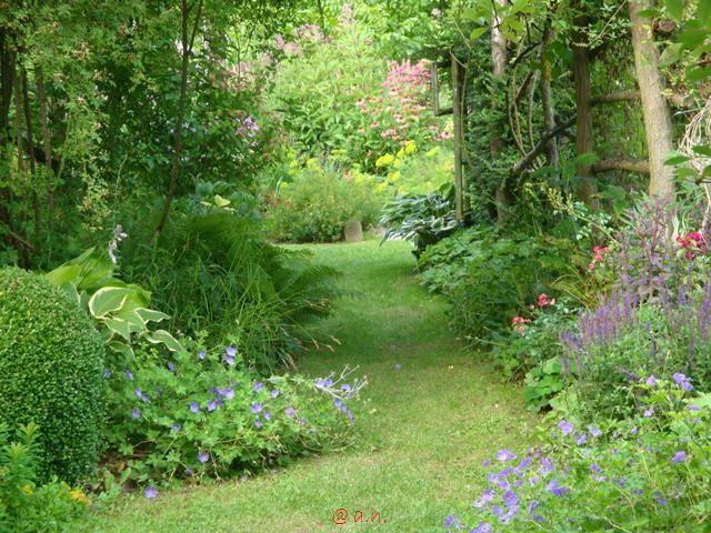 Wasserdost - nur ein Stück oder mehrere einer Sorte kaufen und pflanzen? - Seite 1 - Gartenpraxis - Mein schöner Garten online