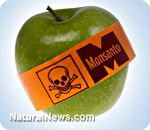 The BIG BOYS are fighting! GMO wars - Monsanto suing DuPont to see who will dominate the world's food supply