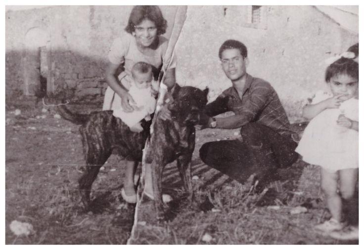 Questa è una selezione di antiche foto che ritraggono cani Corso antichi, funzionali, tradizionali, rustici che vivevano a stretto contatto con la famiglia e utilizzati come cani da lavoro, da guardia e da difesa.