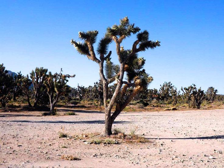 #usa #cactus #desert #roadtrip