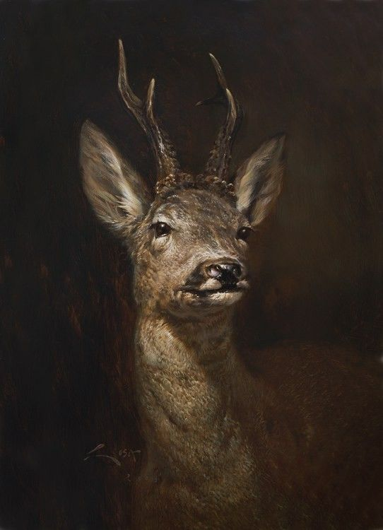 Roe deer portrait ( Capreolus Capreolus ) Oil on table. Manuel Sosa © An oil portrait of a large roe deer wearing his magnificent trident antler. A picture of the year 2003 #sosa #deer