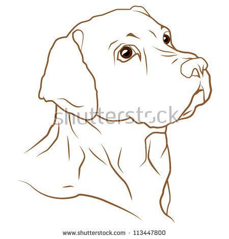 A beautiful vector illustration of a labrador retriever dog