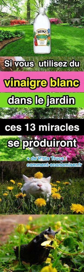 Si Vous Utilisez du Vinaigre Blanc Dans le Jardin, Ces 13 Miracles Se Produiront.